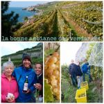 Vendanges_2016_-_Ambiance.jpeg